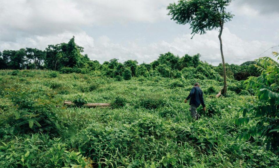 En Tucupita y Uracoa, en el estado Delta Amacuro y Monagas, la Comuna Ribereña del Caño Mánamo Hugo Chávez Frías produce 40 litros de leche de búfala diarios, para el sustento de la comunidad
