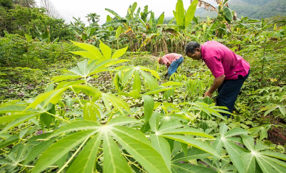 El Consejo Comunal Yaguaracual construye economía solidaria a partir del trabajo liberador y la autogestión