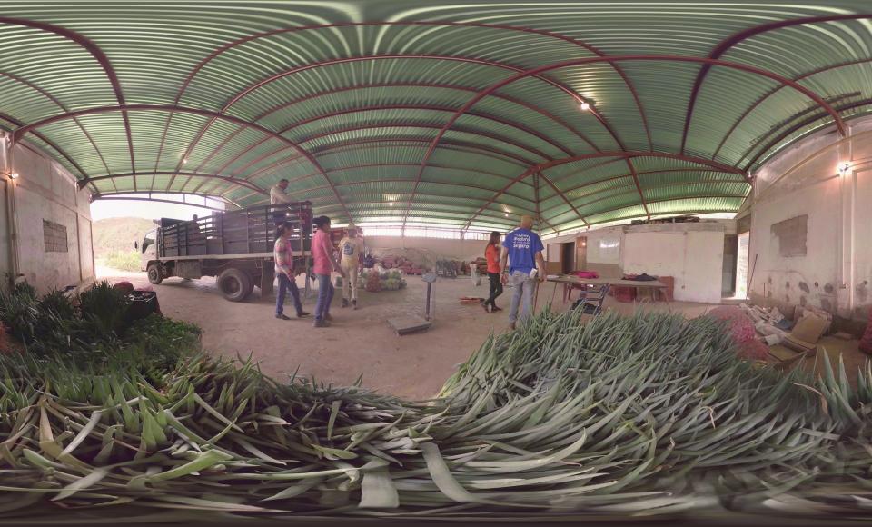 El Plan Pueblo a Pueblo, con autogestión y economía solidaria, hace de la cosecha de maíz una forma de trabajo liberador