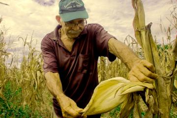 El Consejo Comunal Guatacaro, con autogestión y economía solidaria, hace de la cosecha de maíz una forma de trabajo liberador