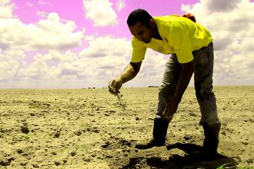 El Consejo Comunal Mata Negra, mediante la cosecha de sorgo fortalece la economía solidaria e impulsa el trabajo liberador