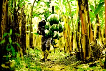 La Cooperativa de Producción Agroecológica El Guabo, con autogestión y economía solidaria, hace del cultivo una forma de trabajo liberador.